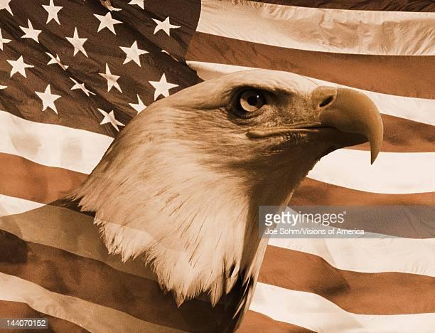 Sepia tone American bald eagle and American flag