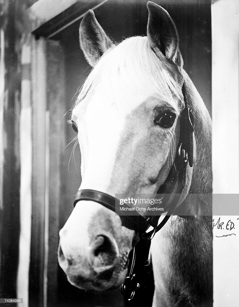Photo of Mister Ed : News Photo
