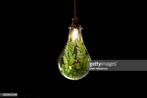 a photo of plants in a light bulb. figurative visuals of green power, renewable energy and environmental protection. - light natural phenomenon ストックフォトと画像
