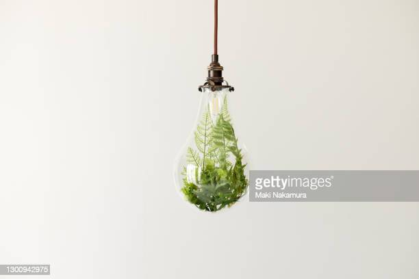 a photo of plants in a light bulb. figurative visuals of green power, renewable energy and environmental protection. - environmental issues stock pictures, royalty-free photos & images