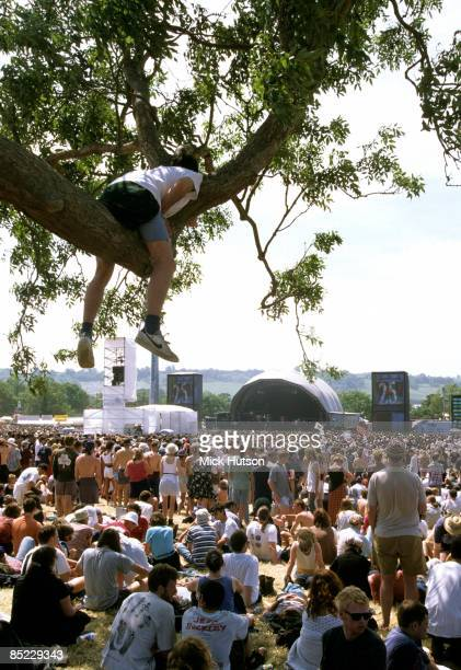 FESTIVAL Photo of STAGE and CROWDS and FANS and FESTIVALS a fan sits up a tree looking over the crowd at the main stage 25th anniversary of the...