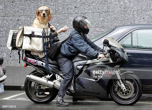 Photo shows a dog travelling on the back of a motorbike in Melbourne city today on 9th February 2006 THE AGE DIARY Picture by JASON SOUTH