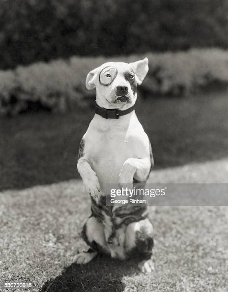 Name Of The Little Rascals Dog