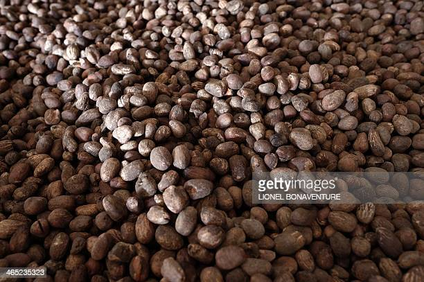 Photo shows shea nuts on a shea butter production line for the French cosmetics company L'Occitane in Leo southcentral Burkina Faso on January 24...