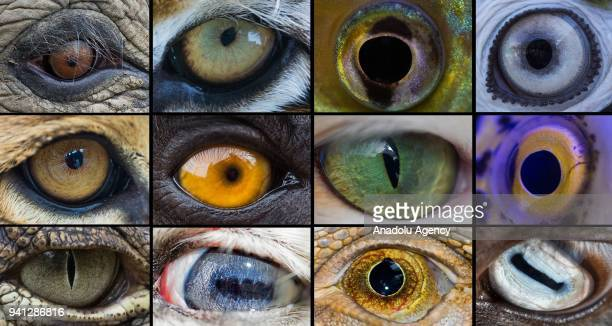 A photo shows the closeup of eyes of the different animal species on April 03 2018 in Izmir Turkey Each of the millions of different animal species...