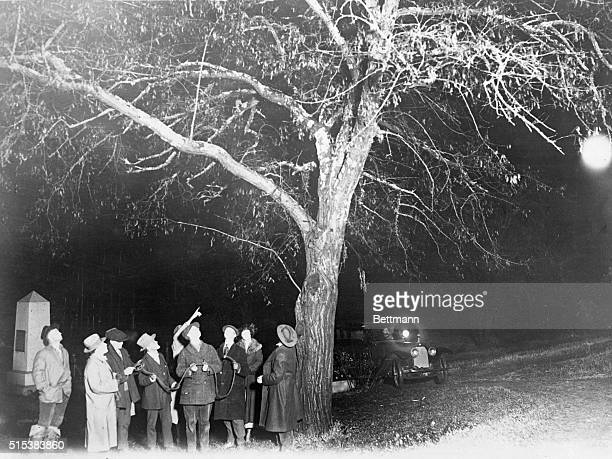 Photo Shows the Tree from Which the Gangsters Were Hung