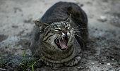 photo street hungry cat city pet