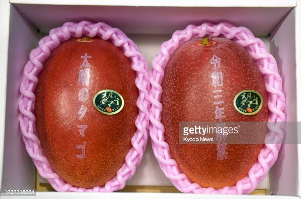 """Photo taken April 15 shows a pair of brand-name mangoes from the southwestern Japan prefecture of Miyazaki, """"Taiyo no Tamago"""" , which fetched a..."""