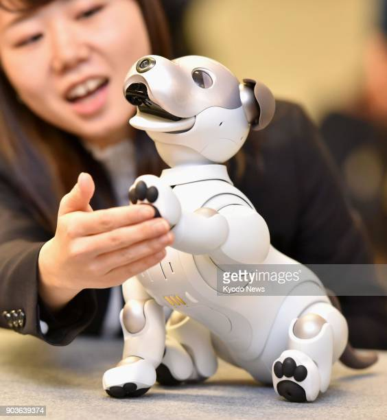 Photo taken at the head office of Sony Corp in Tokyo on Jan 11 shows its new artificialintelligence equipped Aibo robot dog which was launched in...