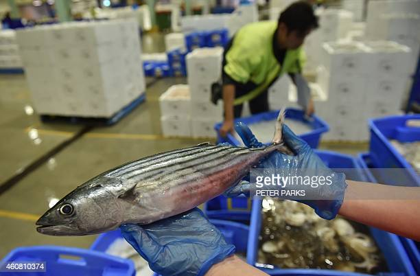Photo taken early on December 23 2014 shows a vendor holding an albacore for sale in the auction house at the Sydney Fish Market in Sydney The Sydney...