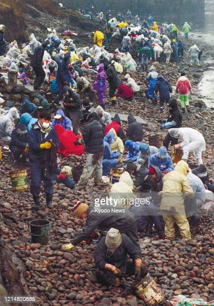 Photo taken Feb. 1 shows people cleaning to remove oil from a beach in Mikuni, Fukui Prefecture, after the Russian tanker Nakhodka broke up in the...