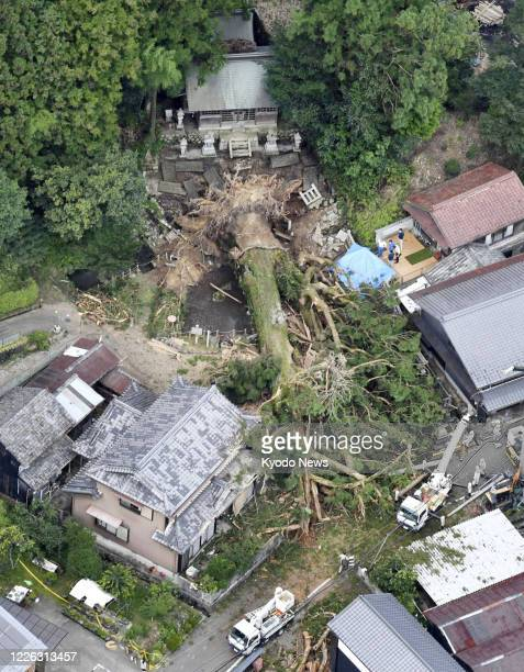 Photo taken from a Kyodo News helicopter over Shinmei Shrine in Mizunami in Gifu Prefecture central Japan on July 12 shows a sacred tree more than 40...