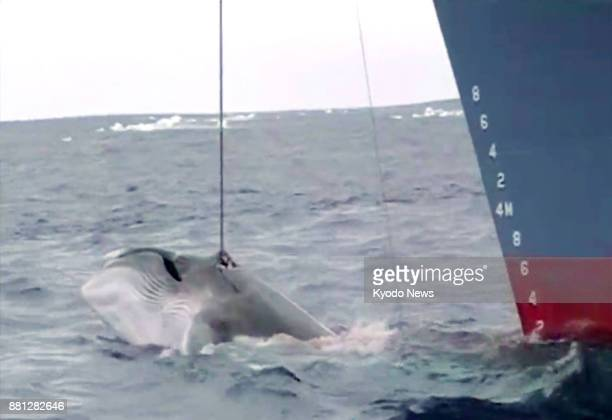 Photo taken in 2008 supplied by antiwhaling activist group Sea Shepherd shows a Japanese ship hunting whales ==Kyodo