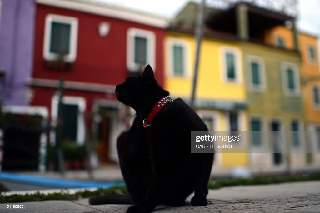A photo taken on August 25, 2014 shows colored houses in Burano, an island in the Venetian lagoon