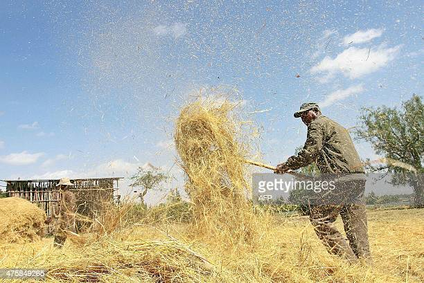 Photo taken on February 20 2014 shows a farmer winnowing a dried teff crop to separate seeds from stalks at Ada village in Bishoftu town Oromia...