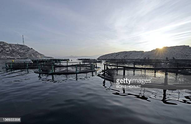 A photo taken on January 12 2012 shows the Frioul fish farm near the southern French city of Marseille 60 tons of organic fish are raised each year...