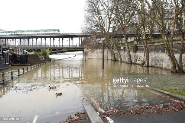 A photo taken on January 23 2018 shows ducks swimming on a flooded bank and an aerial metro passsing on the BirHakeim bridge as the river Seine level...