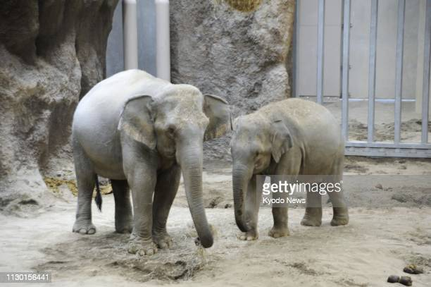 Photo taken on March 12 shows Asian elephants Shu Thein and Nyein at the Maruyama Zoo in Sapporo northern Japan ==Kyodo