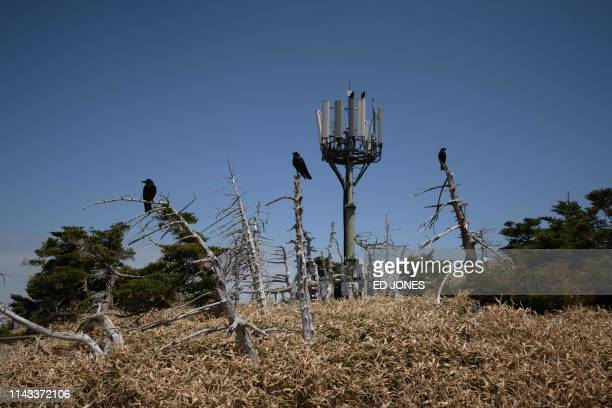 A photo taken on May 9 2019 shows crows perched before a telecommunications antenna on Hallasan or Halla mountain on Jeju island