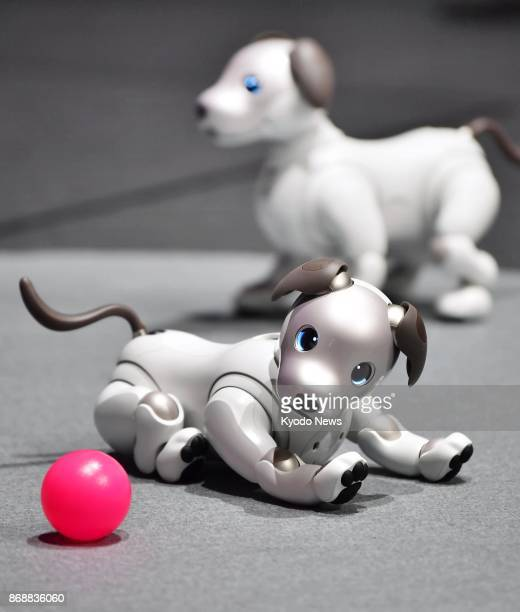 Photo taken on Nov 1 in Tokyo shows Sony Corp's newly unveiled update of the artificially intelligent AIBO robot dog Sony has created multiple AIBO...
