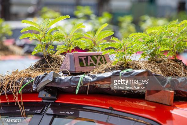 Photo taken on Sept. 24, 2021 shows vegetables growing on a taxi's roof at a parking lot in Bankok, capital of Thailand. At a parking lot on the...
