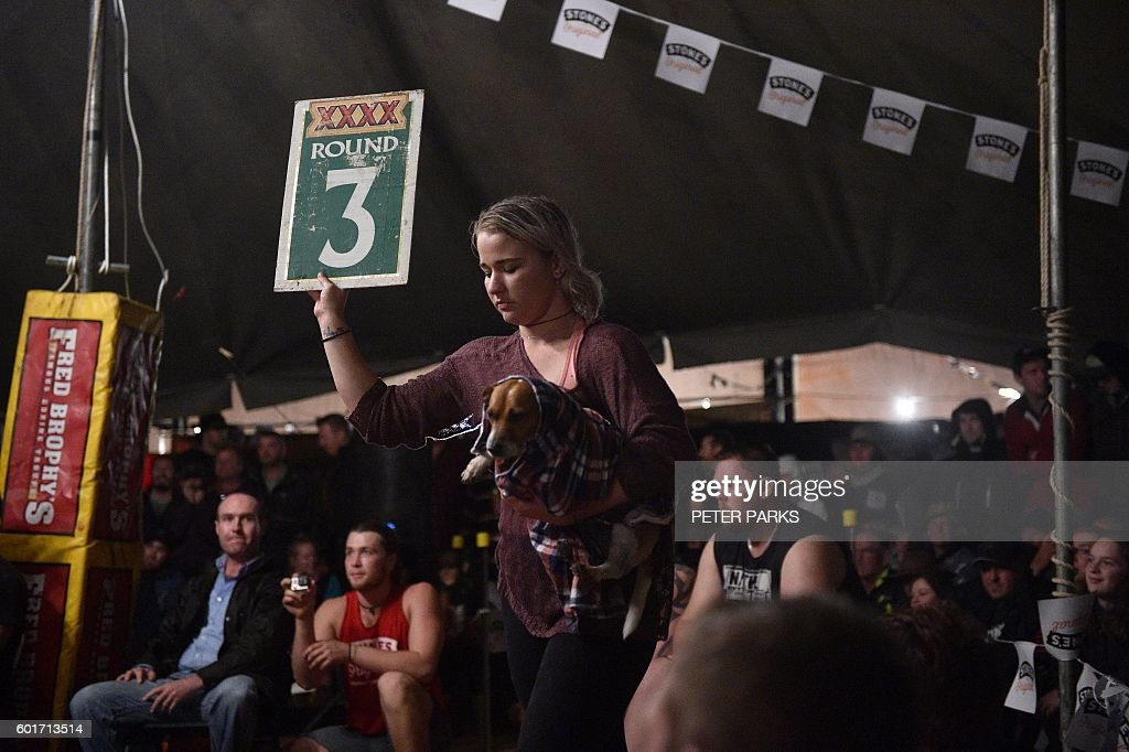 Photo taken on September 1 2016 shows a ring girl holding up the round number as boxers fight in the Fred Brophy boxing troupe tent in the outback town of ...  sc 1 st  Getty Images & Photo taken on September 1 2016 shows a ring girl holding up the ...