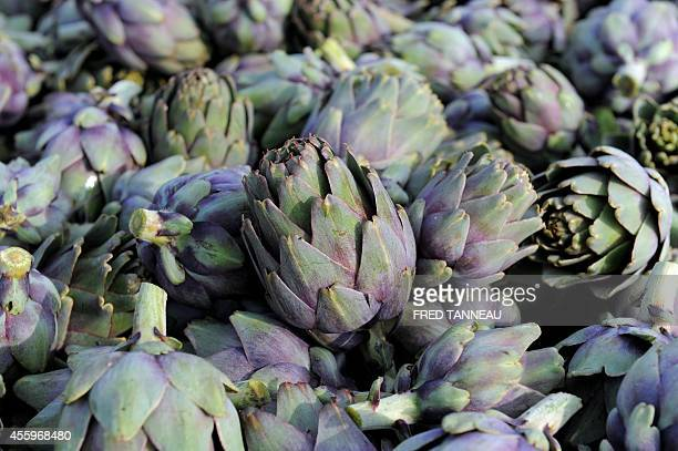 A photo taken on September 23 2014 shows an artichoke field in SaintPoldeLeon western of France French vegetable farmers say they are losing money...