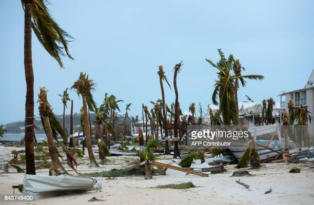 TOPSHOT A photo taken on September 6 2017 shows broken palm trees on the beach of the Hotel Mercure in Marigot near the Bay of Nettle on the French...