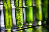 Photobioreactor in lab algae fuel biofuel industry, Algae fuel, Algae research in industrial laboratories