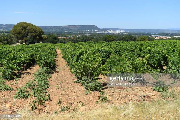 Photograh taken on June 30 in Saint-Laurent-des-Arbres, southern France, shows one of the two places, now covered with vines, where 39 children and 4...