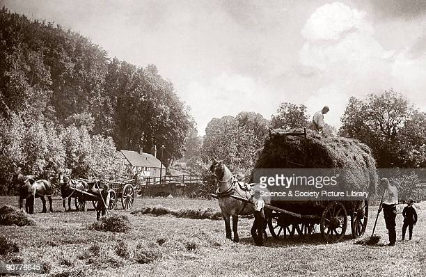 Photograph by Colonel Gale showing farm workers loading a cart with wheat One man steadies the horse another forks the sheaves up to a third man...