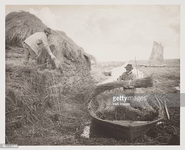 Photograph by Peter Henry Emerson showing reed for thatching being stacked in a rick.