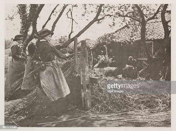 Photograph by Peter Henry Emerson showing women peeling willow for use in basketmaking and other crafts