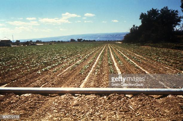 Photograph of a furrowed field with an irrigation pipeline running across it a method that minimizes the accumulation of standing water and the...