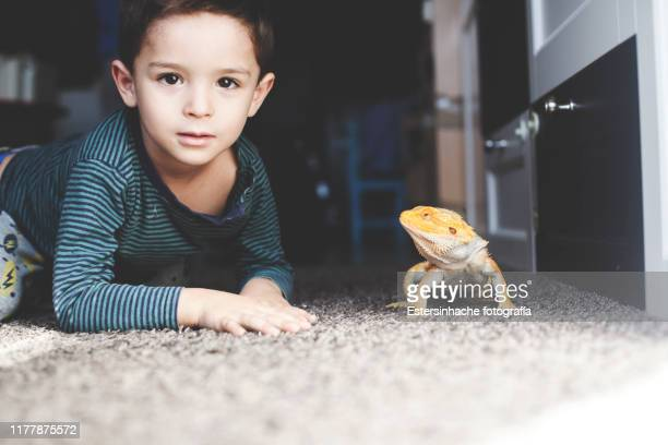 photograph of a little boy next to his pet: a bearded dragon, who stares at him - bearded dragon stock pictures, royalty-free photos & images