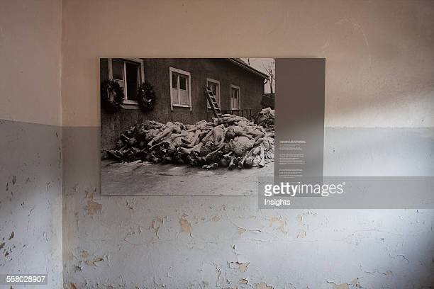 Photograph Of A Pile Of Corpses From 1945 Buchenwald Concentration Camp Germany