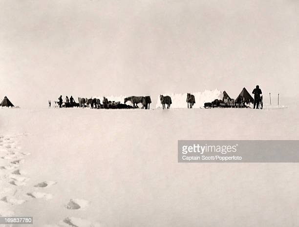 A photograph of a pony camp on the Great Ice Barrier taken during the last tragic voyage to Antarctica by Captain Robert Falcon Scott circa November...