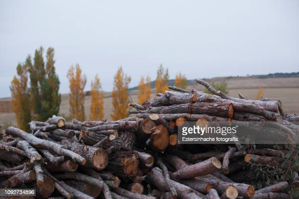 Photograph of a set of firewood in a village
