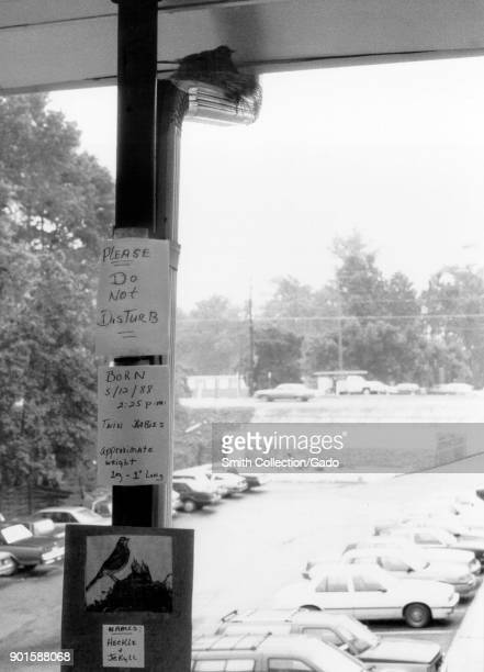 Photograph of an American robin's nest resting on a drain pipe outside a CDC facility with handwritten signs posted urging to preserve it this...