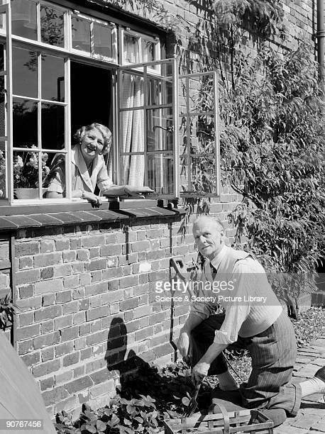 A photograph of an elderly man gardening as a woman looks on from an open window taken by Photographic Advertising Limited in 1953 This photograph of...