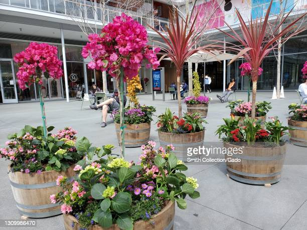 Photograph of barrel planters with colorful flowers in the courtyard of the City Center Bishop Ranch shopping mall in San Ramon, California, March...
