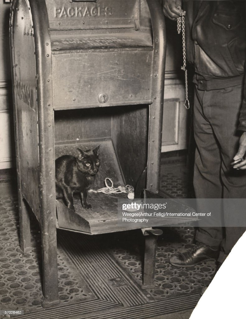 Photograph of 'Blackie,' a black cat found in a Hell's Kitchen mailbox with a clam, pretzel, and piece of string, New York, New York, April 29. 1941. Original caption reads: A garage worker called the cops when he heard meows issuing from a box in Hell's Kitchen, but they couldn't do anything about it, April 29. 1941. They had to call the Post Office. A mechanic opened the box and found Blackie. Whoever threw her in also tossed in a couple of clams and some pretzels. (Photo by Weegee(Arthur Fellig)/International Center of Photography/Getty Images)