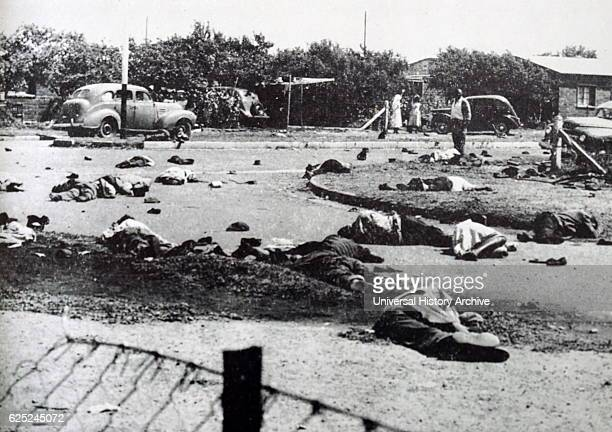 Photograph of dead bodies in the forecourt of the Sharpeville police station in South Africa Dated 20th Century