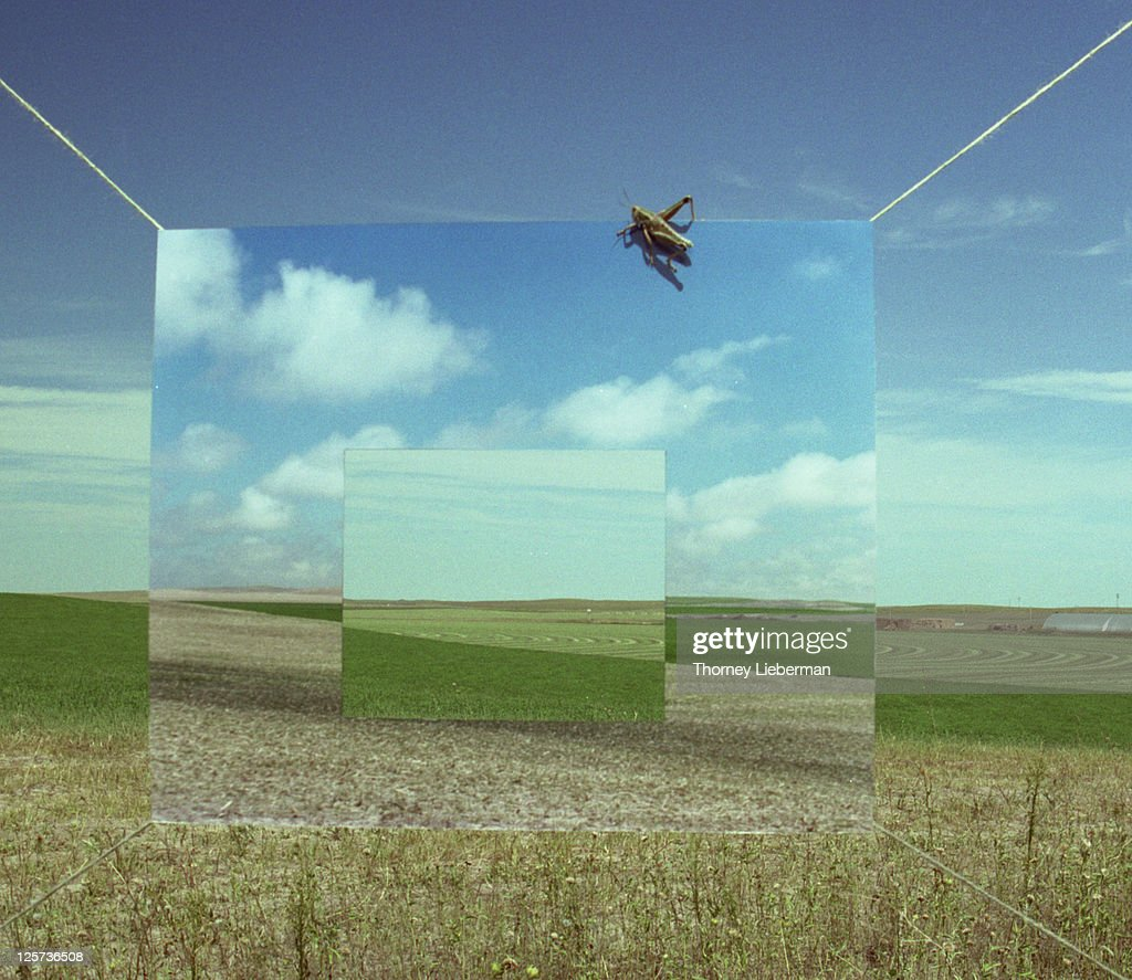 Photograph of Fields : Stock Photo