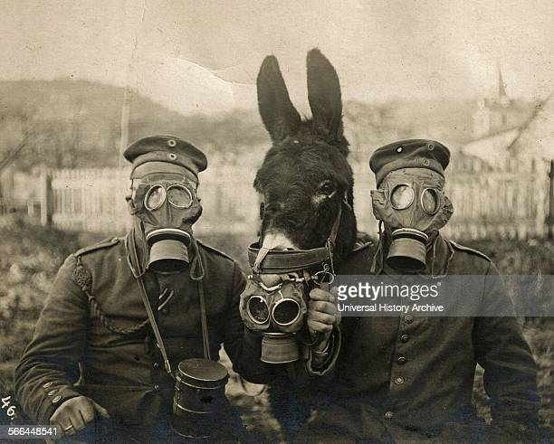 Photograph of German Soldiers and Donkey wearing gas masks during World War One Dated 1915