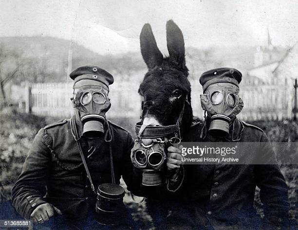 Photograph of German soldiers and their mule wearing gas masks Dated 1916