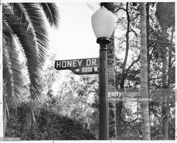 Photograph of Honey Drive street sign at the corner of Laurel Canyon Boulevard in the Hollywood Hills 'A Los Angeles street by any other name might...