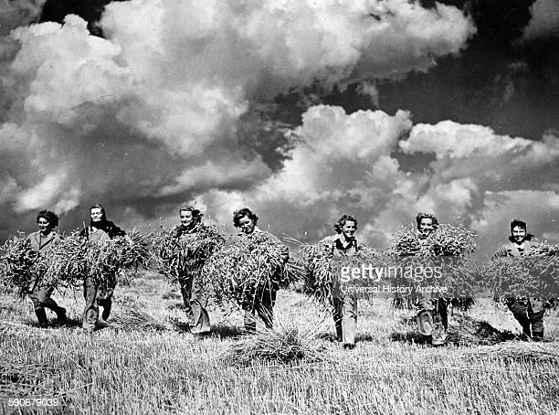 Photograph of 'land girls' during harvest time at a collective farm in the USSR Dated 1942
