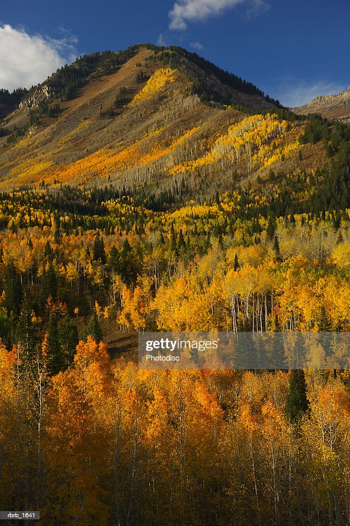 photograph of the beautiful fall colors in the western mountains : Stock Photo