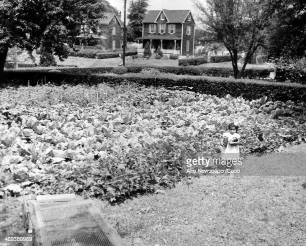 A photograph of the garden at 5300 Block St George Avenue in Wilson Park which won an AFRO award for being an outstanding block in the neighbourhood...